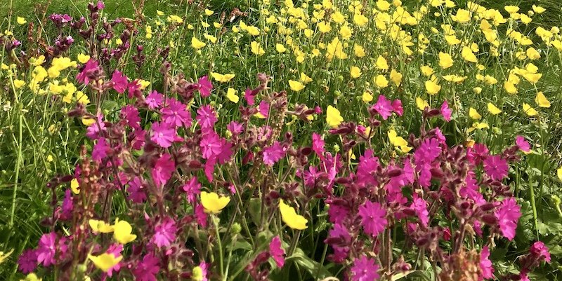 Pink and Yellow flowers in a sunny field